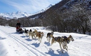 Dog-sledding is just one of many alternatives to skiing
